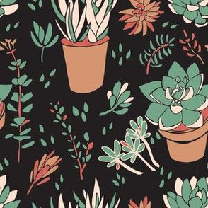 Cream & Green Succulents