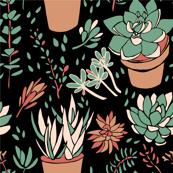 Cream & Green Succulents