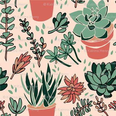 Terra Cotta Succulents