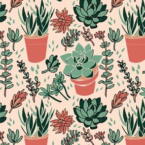 Terra Cotta Succulents