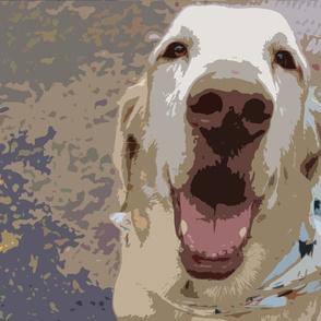 Labrador face