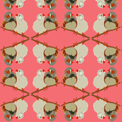 2941 Australian Finches#1 Salmon