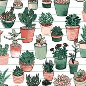 Rrsoft_succulents_shop_thumb
