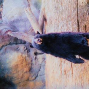 black_bear_TT