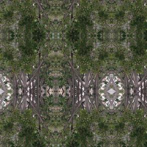 Ficus-green