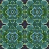 Rsucculent3x4_shop_thumb