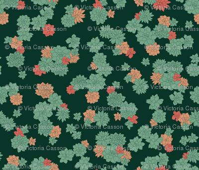 Succulents - Large
