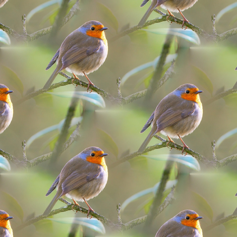 little robin fabric by stofftoy on Spoonflower - custom fabric