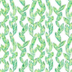Magnolia leaf med
