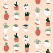 Rsucculents2_shop_thumb
