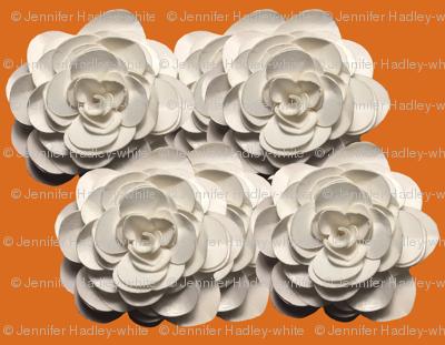 White_Rose_on_orange