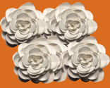 Rwhite_rose_on_orange_thumb