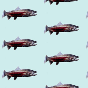 TROUT on blue background