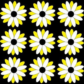 White and yellow daisies on black