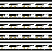 Cats on Black White Stripe
