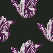 Midnight__tulips_in_merlot__shop_thumb