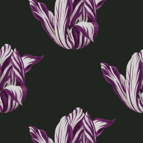 Midnight Tulips in merlot