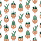 Rrrterracotta-pots-succulent-hairdo_shop_thumb