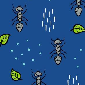 Ants - midnight