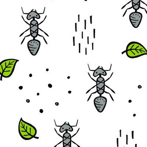 Ants - white