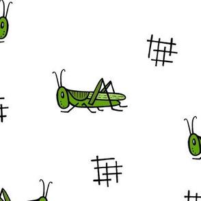 Grasshoppers - white