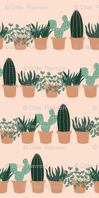 succulent_shelves