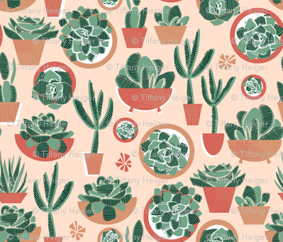 Succulents in Pots Limited Palette Small