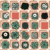 Rrrrspoonflower_succulents_in_square_pots_shop_thumb