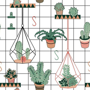 Modern Succulents