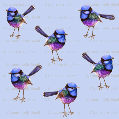 Royal Blue Wrens Periwinkle Violet