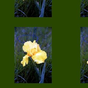 YELLOW_IRIS_ON_GREEN PILLOW