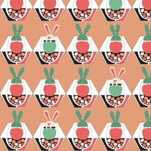 Bunny Succulents in a Terrarium light terracotta