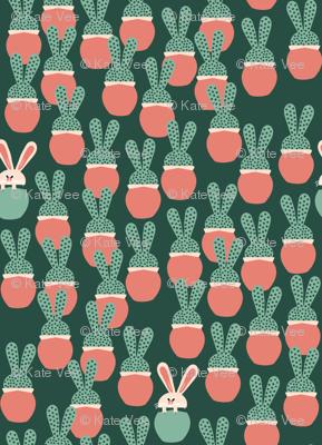 Bunny Succulents random
