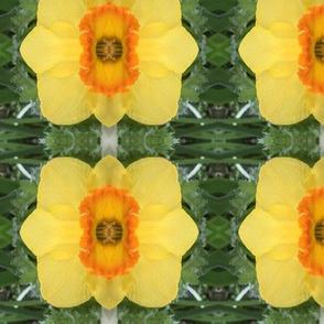 florascope 21
