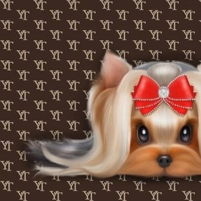 Yorkie Beauty YT XL