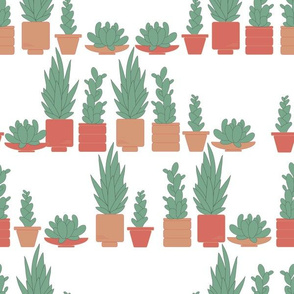 Succulents - All in a row