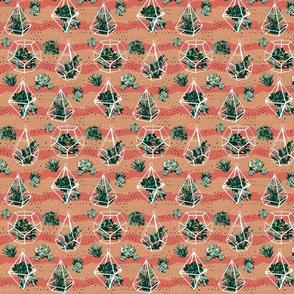 Succulents_limited