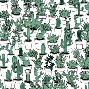 Succulents - green and white