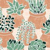 Rsucculent_s_tiny_pots_shop_thumb