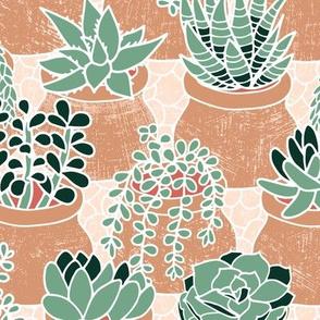 Succulent's tiny pots