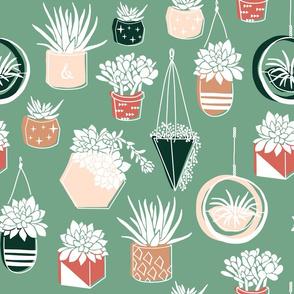 Potted Desert Succulents