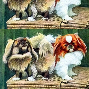 dogs puppy puppies Pekingese vintage retro kitsch whimsical pedigree