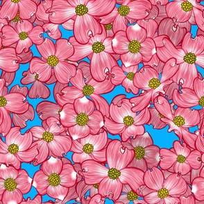 Dogwood Blooms 2