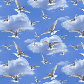 terns in the sky