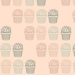 succulent contour pink