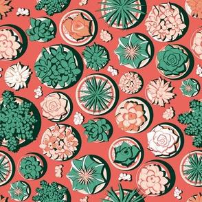 Succulent pots // deep coral background