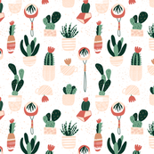 Urban Succulents