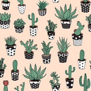 Succulents in spotty pots - on pink