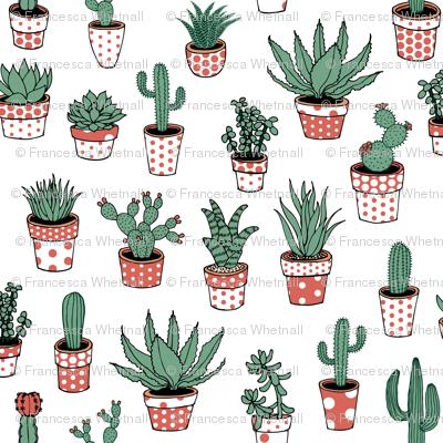 Succulents in spotty pots - terracotta