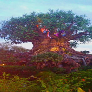 Tree of Life - Lion King